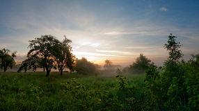 Sunset in countryside. Scenic view of sunset in countryside with trees in foreground royalty free stock photography