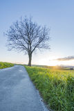 Sunset at countryside with road and tree Stock Image