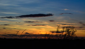 Sunset in countryside. Summer sunset in countryside with plants silhouetted Stock Images