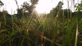 Sunset in the countryside. The sun's rays pass through the grass. stock video