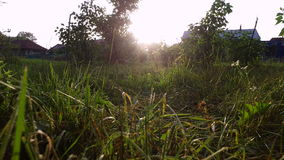 Sunset in the countryside. The sun's rays pass through the grass. stock video footage