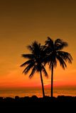 Sunset with couplecoconut tree Stock Photos