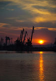 Sunset with cranes Royalty Free Stock Image