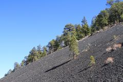 USA, Arizona/Sunset Crater: Cinder Slope with Pines Royalty Free Stock Images