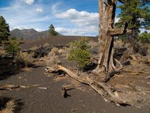 Sunset Crater National Monument Stock Photos