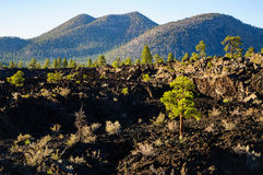 Sunset Crater National Monument Royalty Free Stock Images
