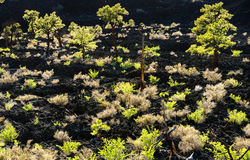 Sunset Crater National Monument Stock Image