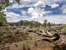 Sunset Crater Volcano National Monument lava flow Royalty Free Stock Photography