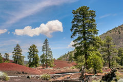 Sunset Crater Volcano National Monument royalty free stock photo