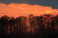 Sunset with crimson clouds. Above the trees Royalty Free Stock Images