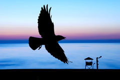 Sunset and crow. Sunset with clear blue sky and silhouette crow Royalty Free Stock Images