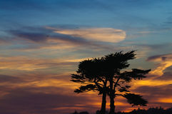 Sunset cypress. Sunset with a pair of Cypress trees sihouetted against an African sky Royalty Free Stock Image