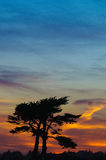 Sunset cypress Royalty Free Stock Photography
