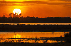 Sunset in the Danube Delta. With birds flying over the water surface or foraging on the ground royalty free stock image