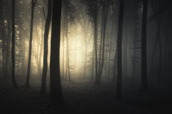 Sunset in a dark mysterious forest with fog Royalty Free Stock Images