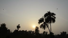 Sunset among date trees stock video