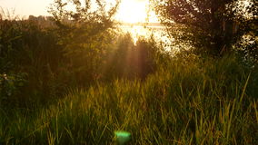 Sunset dawn grass nature stock video