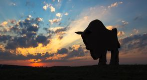 Sunset dawn sun rays over the city sky field statue bison sculpture silhouette royalty free stock image