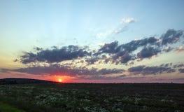 Sunset dawn sunrays over the city sky field flowers stock photos