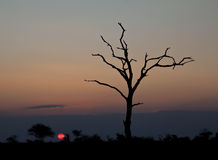 Sunset with dead tree Royalty Free Stock Images