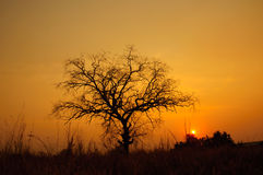Sunset with dead tree Stock Photography