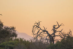 Sunset with a dead tree in the foreground Royalty Free Stock Images