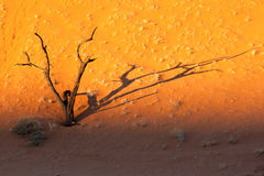 Sunset in Dead Vlei, Namibia Stock Photography