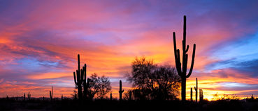 Sunset in desert. Royalty Free Stock Photography
