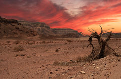 Sunset in desert. Beautiful sunset in Arava desert, Israel Stock Image