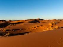 Sunset on the desert. Sunlight highlighting the dunes in the Sahara Royalty Free Stock Photography