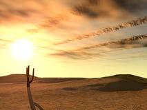 Sunset in desert. A landscape at night in deserted desert Stock Images