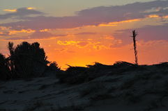 Sunset. In the desert royalty free stock image