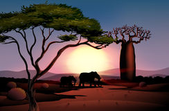 A sunset at the desert with animals Stock Photo