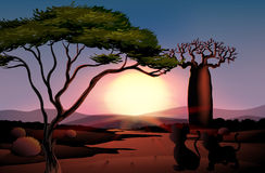A sunset at the desert with animals. Illustration of a sunset at the desert with animals Royalty Free Stock Photo