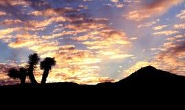 Sunset in the Desert. Sunset from the floor of the Joshua Tree desert royalty free stock images
