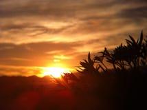 Sunset in desert Royalty Free Stock Photos