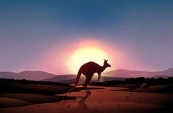 A sunset at the desert with a kangaroo Royalty Free Stock Photo