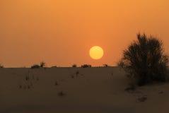 Sunset in desert Royalty Free Stock Photo