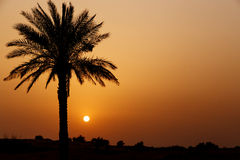 Sunset in desert Royalty Free Stock Photography