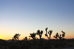 Sunset Desertscape Stock Image