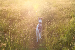 Sunset dog stock photography