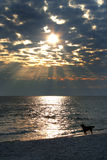 Sunset dog. Dramatic beach sunset with dog silhouette Stock Images