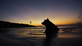 Sunset Dog. Beautiful silhoutte dog Royalty Free Stock Photography