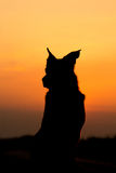 Sunset Dog. A dog sits in the sunset Stock Photo