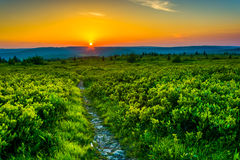 Sunset at Dolly Sods Wilderness, Monongahela National Forest, We. St Virginia Stock Images