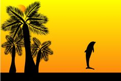 Sunset dolphin. Tropical sunset with a dolphin jumping up in the air Royalty Free Stock Photography