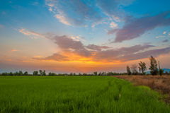 Sunset. Dramatic colourful of sunset with a green field Royalty Free Stock Photography
