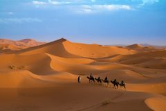 Sand dunes in the Western Sahara with dromedaries. At sunset the dromedaries with tourists go to the desert to see the sun disappear behind the dunes Stock Images