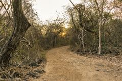 Sunset in a dry forest stock image