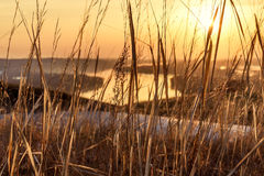 Sunset dry grass background golden Royalty Free Stock Photography